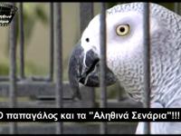 Ο παπαγάλος και τα 'Αληθινά Σενάρια'