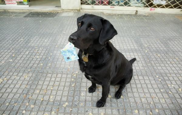 Ένας απίθανος σκύλος: βρίσκει λεφτά όπου κι αν τα κρύψεις…