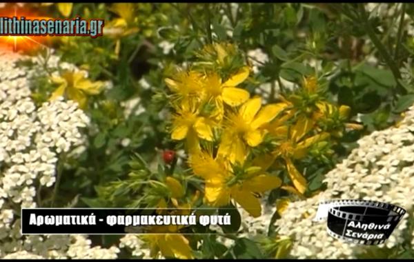 Αρωματικά και φαρμακευτικά φυτά